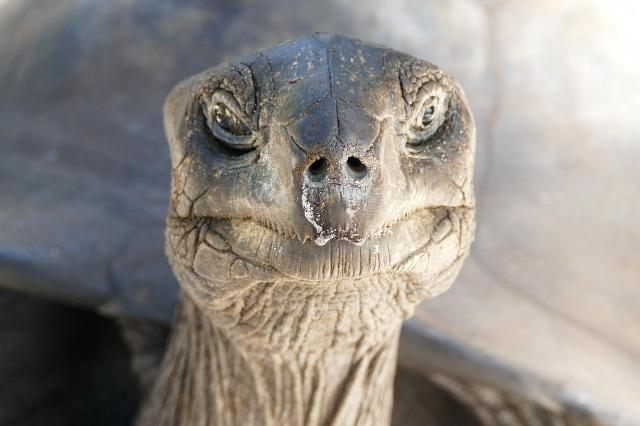 Seychellen_Schildkröte