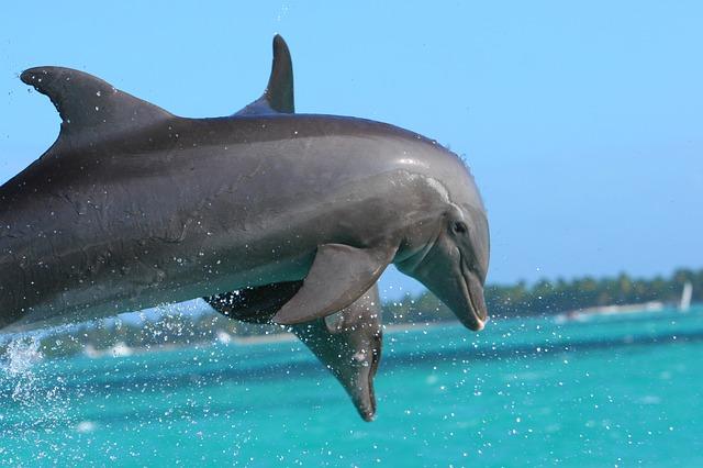 Mexiko - Delfine