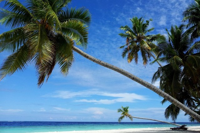 Malediven - Strand mit Palmen