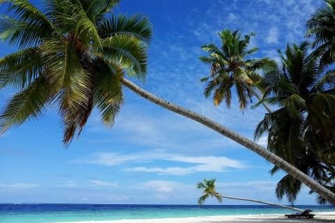 Malediven-Strand-Palmen