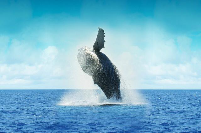 Mexiko - Wale