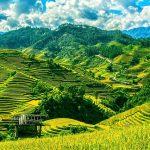 Reis Terrassen Indochina